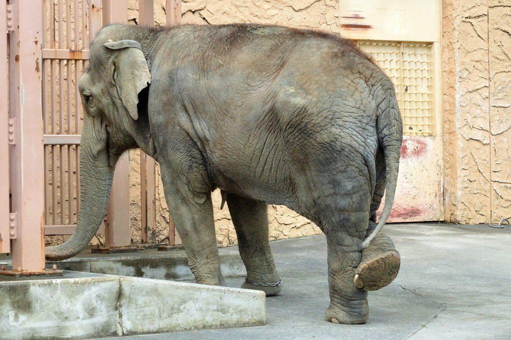 日立市 かみね動物園 お出迎えの像さんは足が痒い