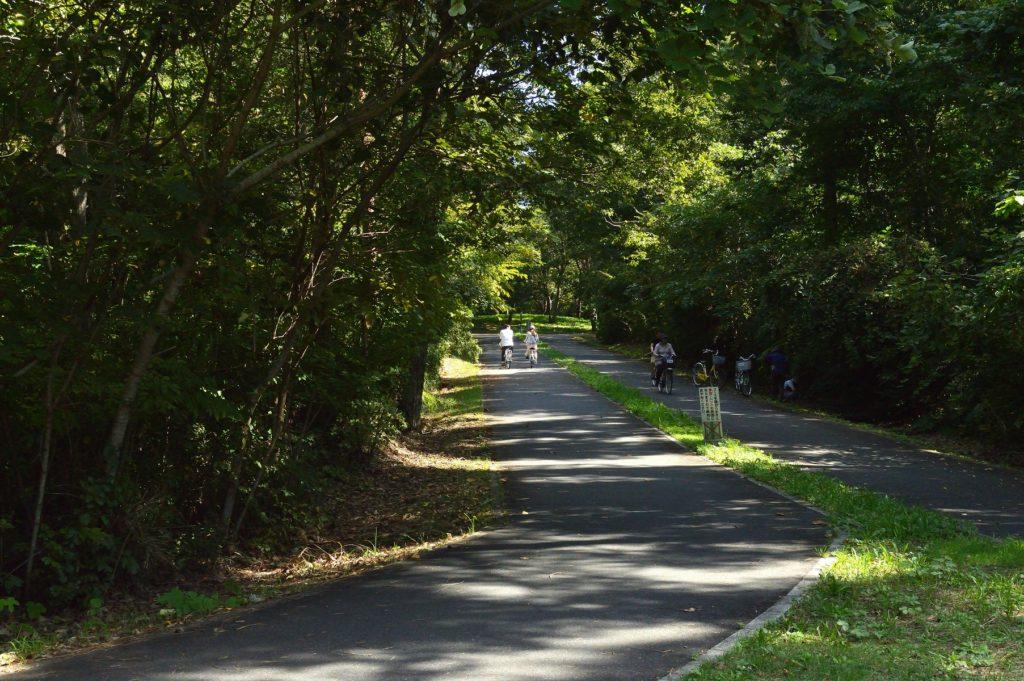 茨城県 ひたち海浜公園 サイクリングロードを走る人々
