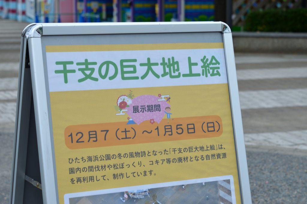 蛇の目の後はひたち海浜公園をお散歩 (3)