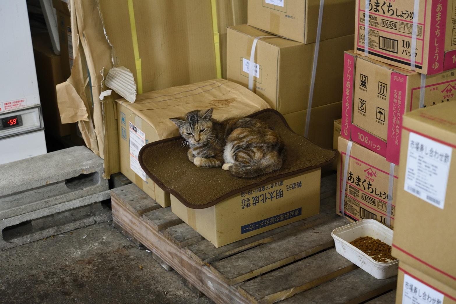 那珂湊 市場寿司 猫
